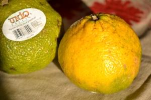 Ugli Fruit ou Uniq Fruit