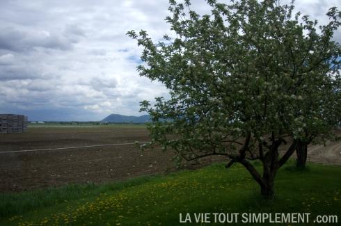 Potager Mont-Rouge - Montérégie